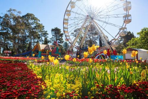 Lễ hội hoa australia có nhiều hoạt động thú vị