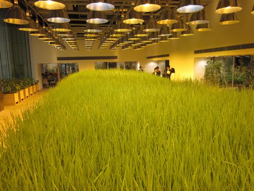 Vườn cây và ruộng trong văn phòng công ty nhật