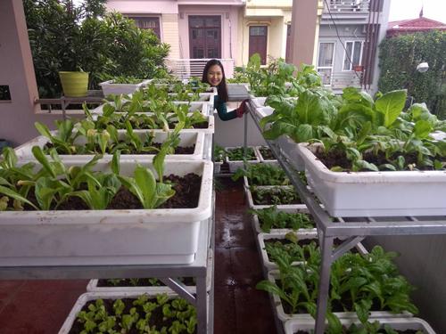 Cùng học cách trồng rau mầm của một người mẹ trẻ