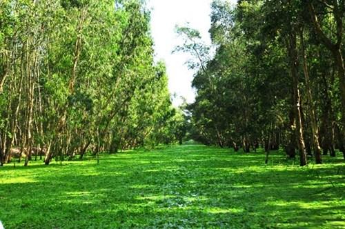 Cùng ngắm cảnh an giang với khung cảnh hương đồng cỏ nội