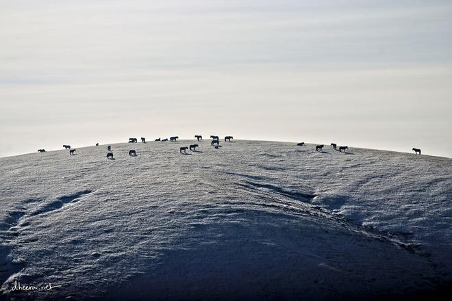 Ngắm mùa đông trên thảo nguyên ở mông cổ