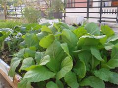Giải pháp thông minh giúp chủ nhà vườn nhàn rỗi