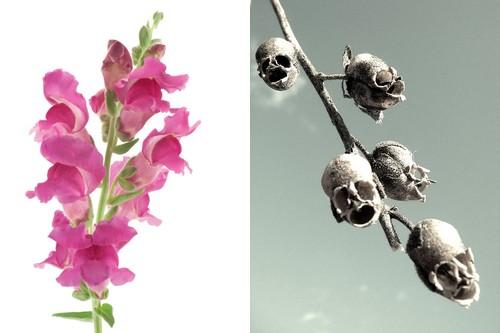 Vẻ đẹp 10 loài hoa kì lạ nhất thế giới