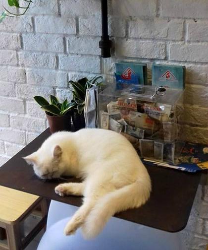 Quán cà phê cho người yêu mèo ở hà nội