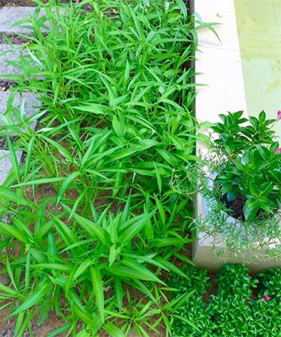 Rau xanh xen giữa vườn hoa ở nhà quyền linh