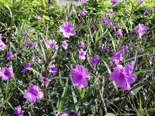 Tổng hợp những loại cây hoa đẹp cứ cắm xuống là mọc