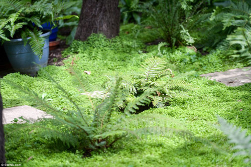 12 năm biến vườn nhà thành rừng mưa nhiệt đới thu nhỏ