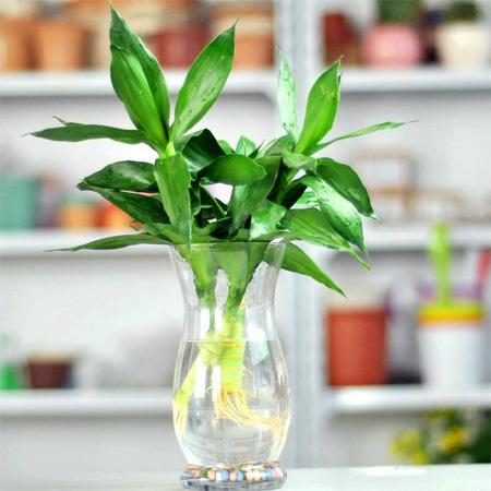 Làm đẹp nhà với các loại cây trồng trong nước