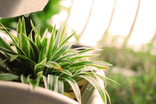 Danh sách top cây cảnh lọc sạch khí độc trong nhà