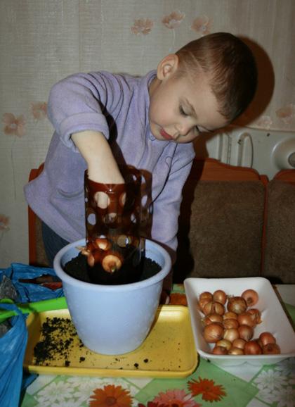 Hướng dẫn trồng một bình nhỏ hành đủ ăn cả tuần