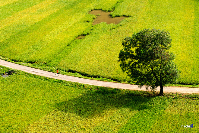 Đến hang múa ngắm khung cảnh đồng quê hiện về như những ngày thơ bé