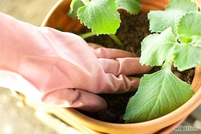 Hướng dẫn trồng cây gia vị đơn giản cho gia đình