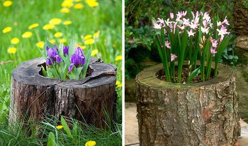 Những gốc cây nở hoa làm đẹp cho vườn