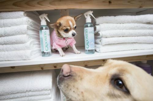 Khách sạn dành riêng cho chó ở scotland