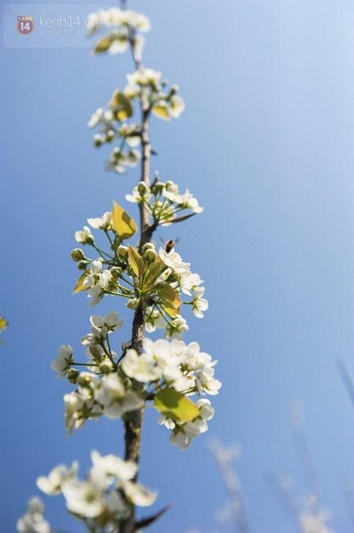 Những sắc hoa đầy mê hoặc ở nơi đẹp nhất việt nam